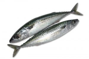 Seafood: Frozen Mackerel from China